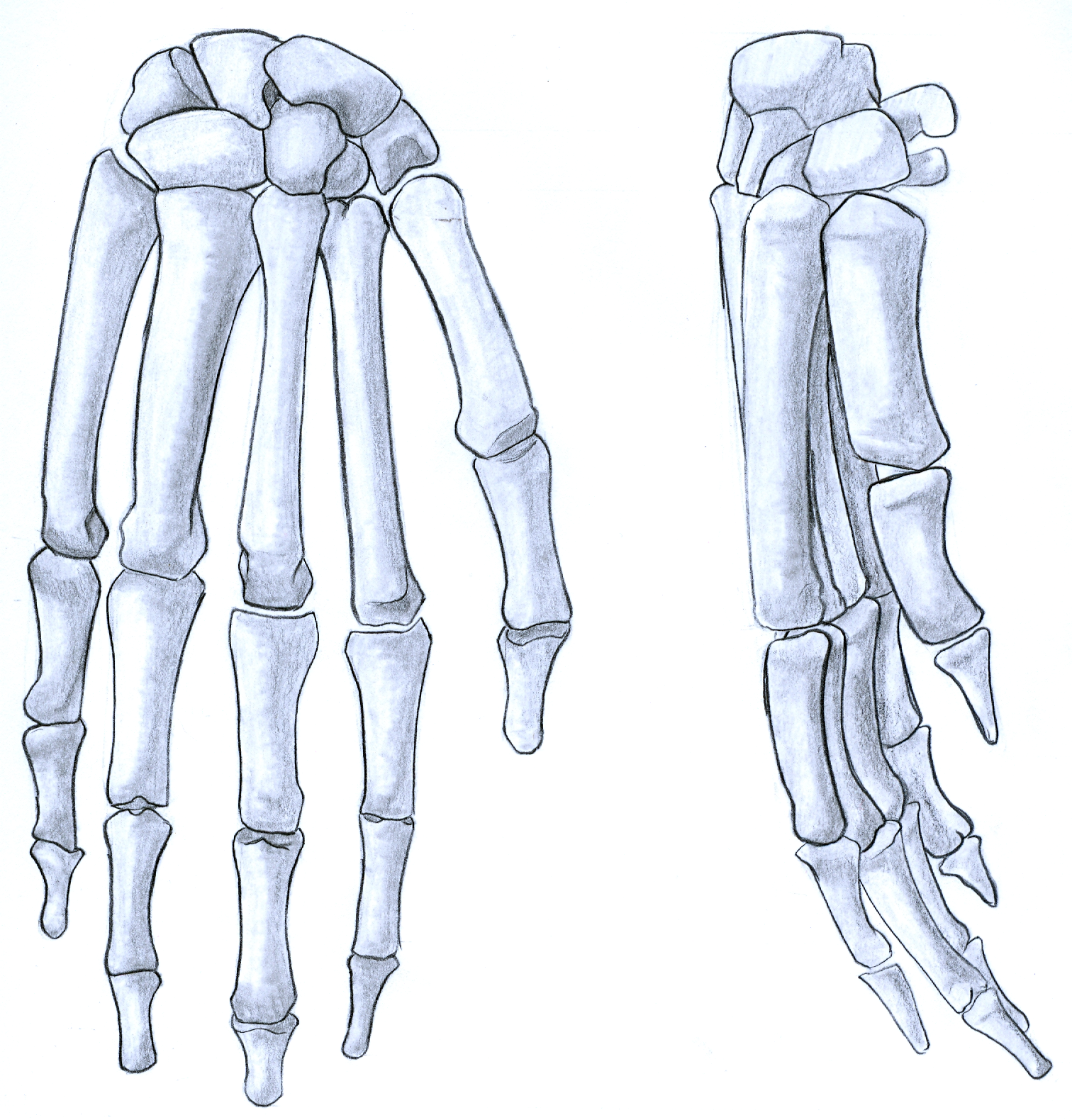 how to draw a bone hand